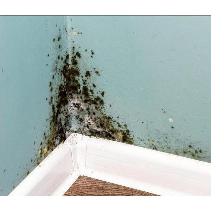Mold found in a home in S.E. Surprise